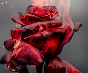 rose, red, and fire image