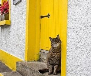 cat, yellow, and door image