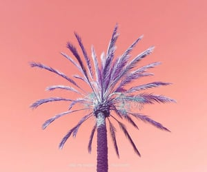 colors, grapefruit, and palm tree image