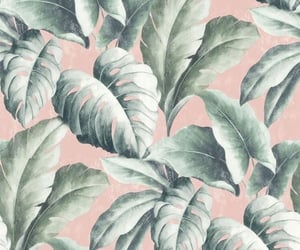 background, pink, and plant image