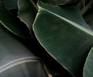 theme, green, and dark image