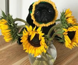 black, dog, and plant image