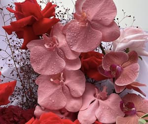 colors, red, and flowers image