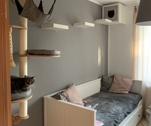 home, living room inspiration, and cat places ideas image