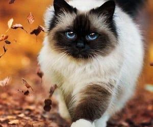 осень, кот, and красиво image