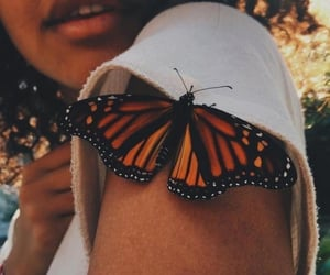 butterfly, aesthetic, and photography image