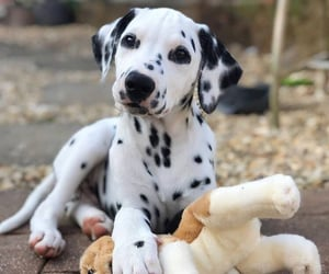 animals, dog, and fun image