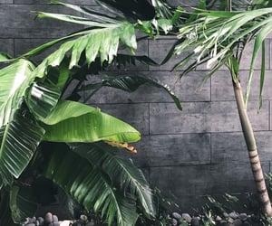 green, jungle, and Miami image