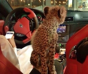 luxury, animal, and car image