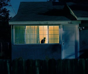 cat, house, and light image