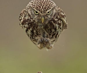 nature and owl image