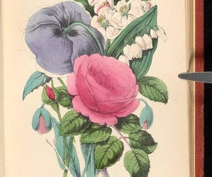 folklore, poetry, and poppy image