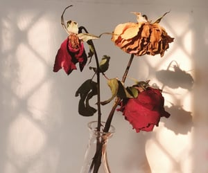 beautiful, thorns, and Dead Flowers image