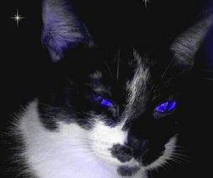 blue, japan, and kawaii image