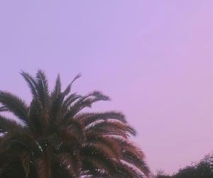 cielo, lila, and pink image