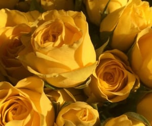 aesthetic, yellow, and yellow roses image