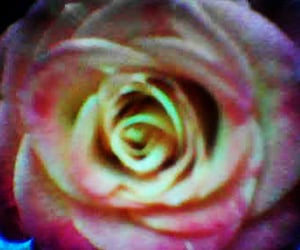flower, grainy, and pixelated image