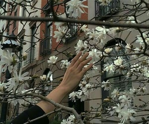 aesthetic, flower, and grey image