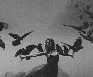 dark, black, and crow image