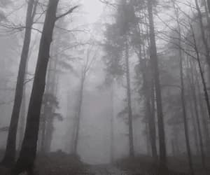 folklore, evermore, and forest image