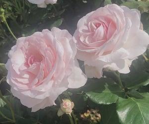 photo, フォト, and 花 image