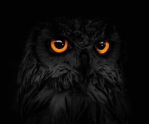 черный, иллюстрация, and птица image