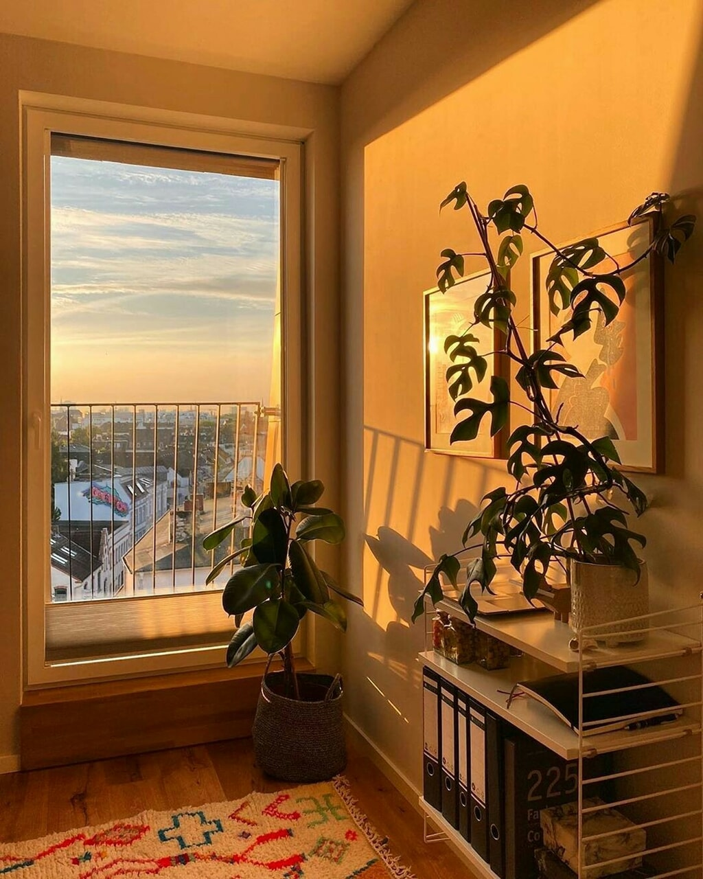 plants, room, and golden hour image