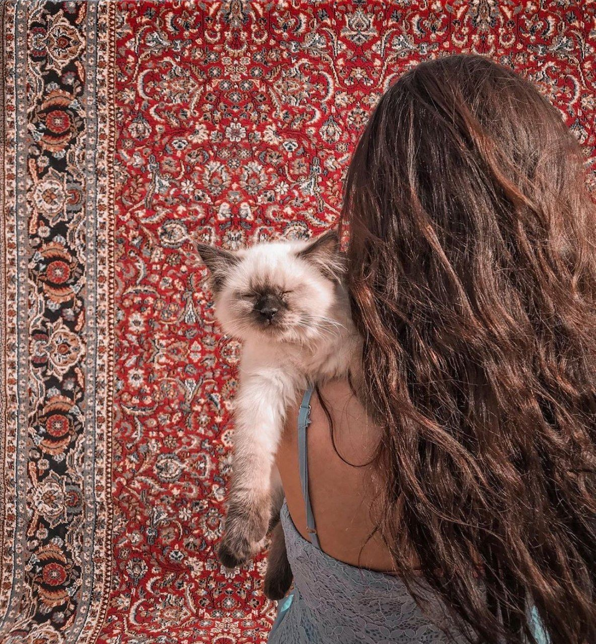 cat, girls, and hair image