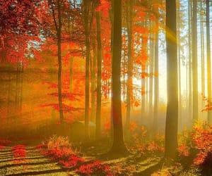 лес, деревья, and красный image