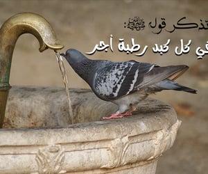ﻋﺮﺑﻲ, ﻋﺮﺏ, and عطشان image