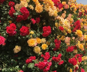 flowers, red, and yellow image