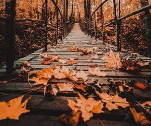 autumn, season, and caramel image