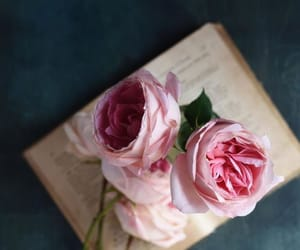 books, photography, and roses image