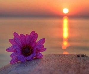 beach, beach aesthetic, and flower image