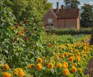 cottage and sunflower image