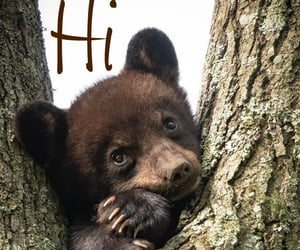 baby bear, bear, and cub image