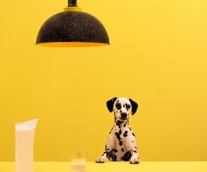advertising, dogs, and yellow image