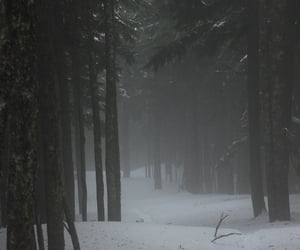 deserted, fog, and pines image