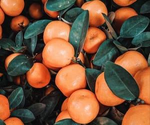 orange and wallpaper image