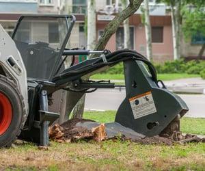 tree stump removal image