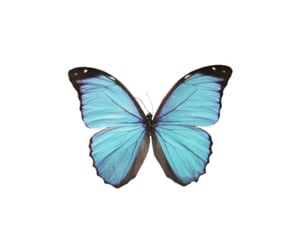 blue, butterfly, and icon image