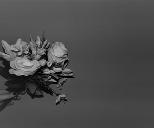 beauty, flowers, and negative space image