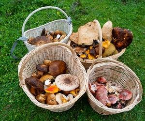 mushroom, nature, and foraging image