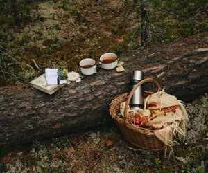 forest and picnic image