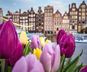 amsterdam, colorful, and netherlands image