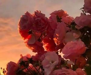 вечер, небо, and цветы image