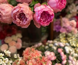 flower, instagram, and manami_hiraki image