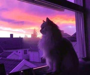 закат, дома, and кот image