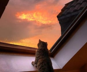 cat, sky, and animal image