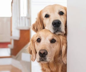 animals, curious, and dogs image